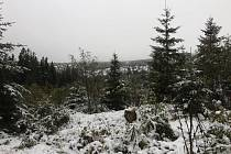 Sníh na Šumavě.