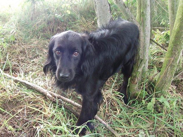 Pes nalezený u Čínova