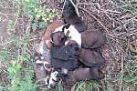 Jedenáct štěňátek nalezených u Radkovic. Některá už byla bohužel mrtvá.