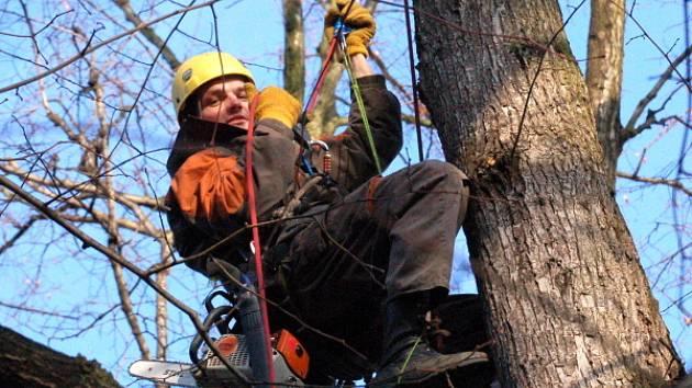 Prořezávka stromů v klatovském parku