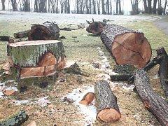V Žihobcích pokáceli stromy na návsi