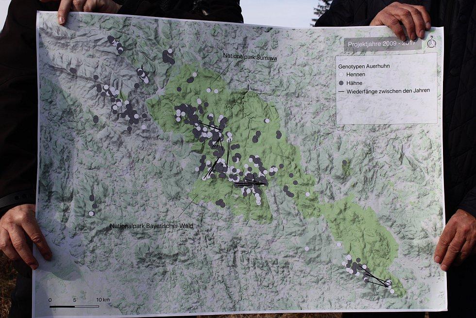 Ředitelé národních parků Šumava a Bavorský les Pavel Hubený a Franz Leibl představili výsledky výzkumu populace tetřeva.