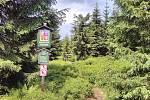 Šumava, historický hraniční přechod Modrý sloup, směr do Luzenského údolí