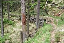 Součástí rezervace Černé a Čertovo jezero je i nyní nepřístupná Lávková cesta kolem Čertova jezera