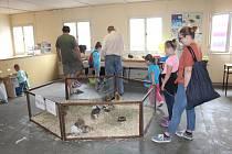 Návštěvníci poutě v Klatovech mohli také navštívit tradiční Výstavu chovatelů, kterou v areálu Na Pazderně pořádá Český svaz chovatelů Klatovy.
