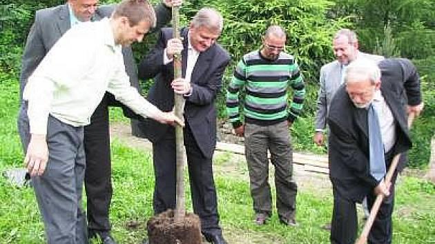 Akci Regenerace zeleně SÚS Klatovy odstartovala výsadba stromu na konci Sušice na výpadovce na Dlouhou Ves.