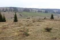 Kácení na loukách v Národním parku Šumava - Zhůří