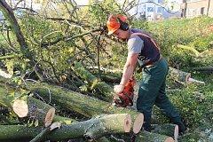 Kácení stromů je nepopulární
