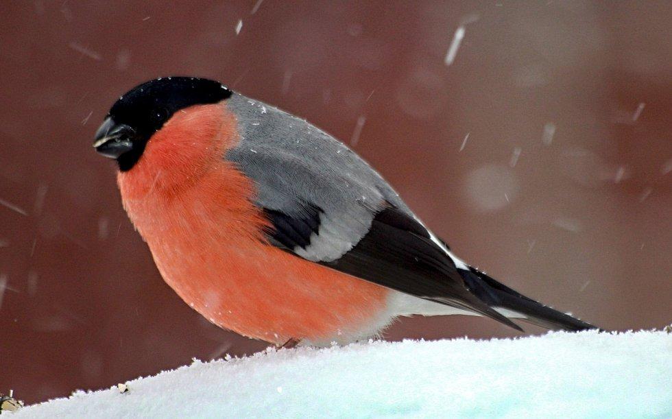 Ptáčci na Filipově Huti.