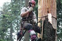 Petr Elsner při odkorňování stromů na Smrčině