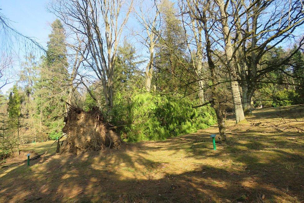 Poničené stromy v Americké zahradě v Chudenicích.