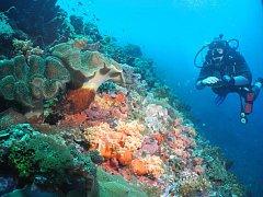 Horažďovičtí potápěči navštívili Indonésii.