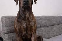 Ztracený pes Frigo.
