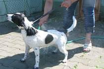 Osvěžující sprcha je pro psy v klatovském útulku jednou z možností, jak se v letních vedrech alespoň trochu ochladit.