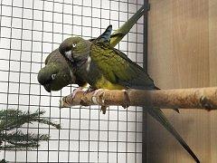 Výstava exotických ptáků v Klatovech