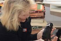 Nedávno narozené štěně se ošetřovatelce vejde do dlaně.