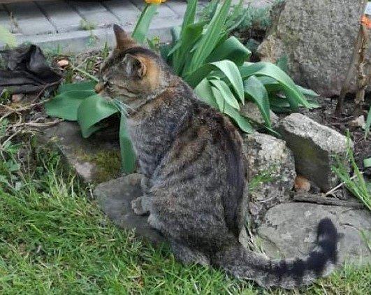 V Bezděkově se ztratila kočka.