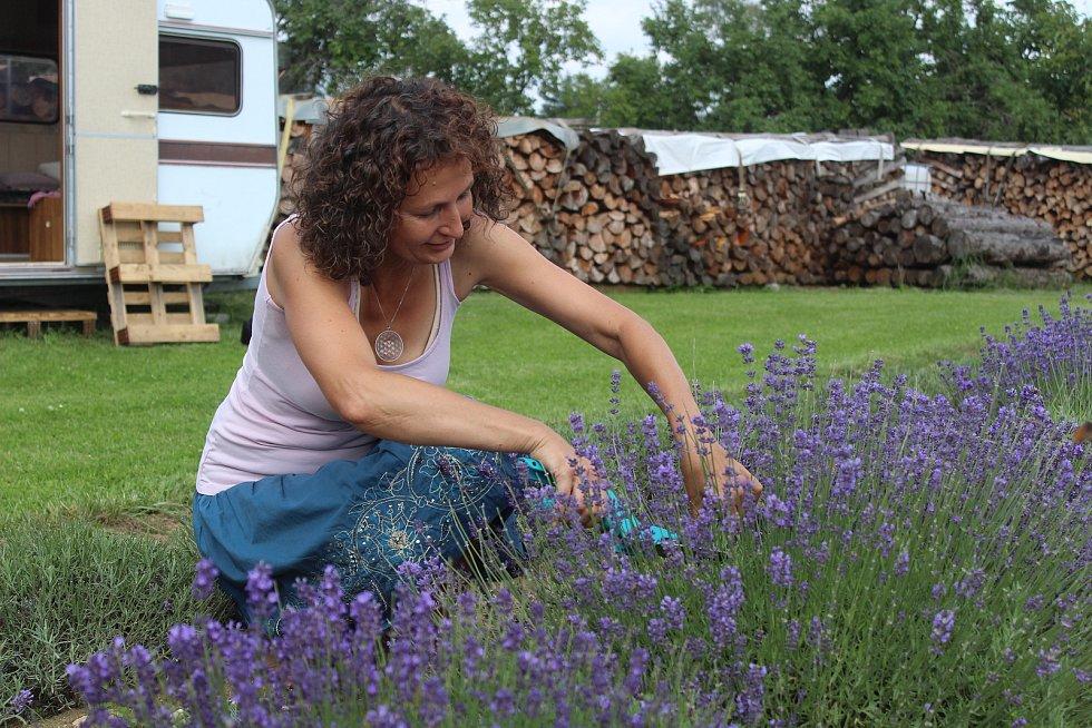 Monika Maxová při sklizni levandule na svém políčku u Damětic.