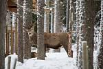 Návštěvnické centrum Kvilda, kde je možné pozorovat jeleny.
