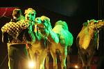 Od 23. do 26. března hostoval v Klatovech cirkus Arlet.