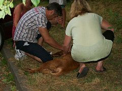Pes zemřel na přehřátí v autě