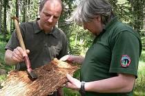 Náměstek řediitele NPŠ Jiří Mánek (vlevo) a  zoolog a entomolog NPŠ Oldřich Vojtěch prohlížejí kůrovce napadené parazity.