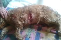 Bojový pes Nellu zřídil tak, že neměla šanci přežít.