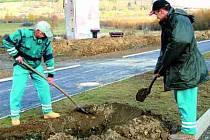 Podél propojovací komunikace v lokalitě pod Borem v Klatovech, na níž bude zahájen koncem měsíce zkušební provoz, začali včera sázet zhruba dvě stovky lip pracovníci zahradnické firmy z Litoměřic.