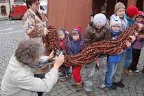 Kaštanový had v Sušici