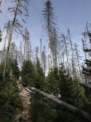 Zmlazení lesa - Plechý