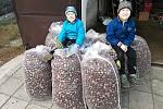 Dosavadní rekord ve sběru kaštanů překonali letos pačejovští školáci více než trojnásobně.