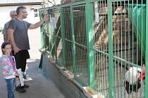 Výstava drobného zvířectva na Pazderně v Klatovech.