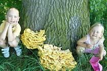 Další pěkný úlovek si ve středu do své sbírky připsal malý houbař Tadeáš Krobot z Chudenic