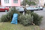 Vánoční stromky v Podhůrčí.