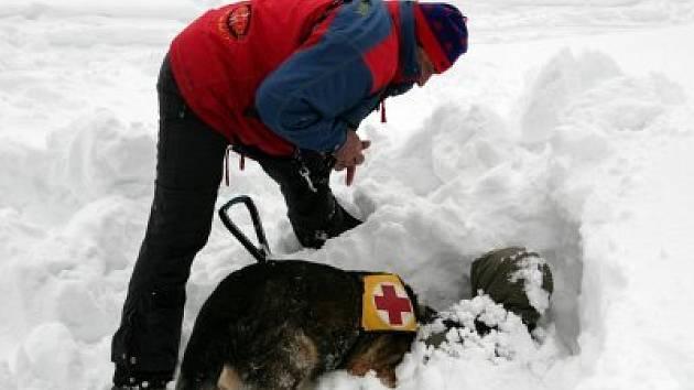 Při cvičení strážců šumavského a bavorského národního parku s Horskou službou Šumava právě našel pes Erik záchranáře Vlastimila Maxy figuranta pod sněhem.