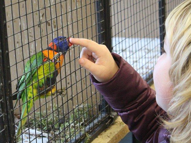 Výstava exotického ptactva v Lubech.