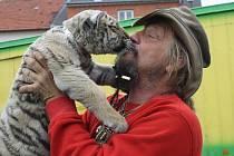 Principál cirkusu Jo - Joo Jaromír Joo se rád mazlí se mládětem tygra bílého Bobem