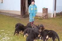 V Chudeníně se narodilo dvanáct štěňat