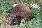 Nedaleko domu manželů Ofnerových v Podolí na Běšinsku někdo vyhazuje mrtvé ovce.