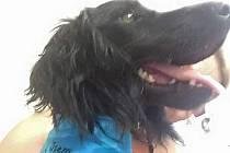 Pes, kterého našli uvázaného u značky.