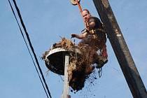 Stěhování čapího hnízda v Dražovicích