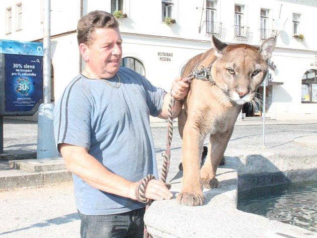 Miroslav Lenc z Horažďovic chová lvici a dvě pumy a běžně s nimi chodí na procházky po městě.