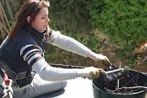 Jana Voráčková  ze záchranné stanice živočichů při úklidu pod hnízdem čápa bílého v Dobřanech.