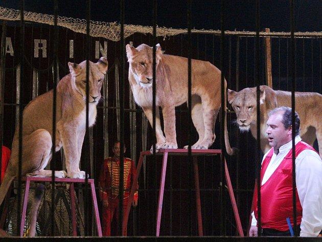 Cirkus Carini v Klatovech.