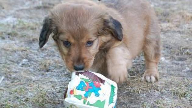Během šestileté existence klatovského útulku pro opuštěné a zatoulané psy jím prošla více než tisícovka chlupáčů. Ti v zařízení v žádném případě nestrádají, ale není nad to mít vlastní pelíšek.