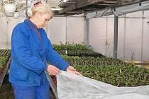 Zahradnictví již čekají jenom na hezké počasí, aby mohla odstartovat prodej. Na snímku je Dana Papoušková ze zahradnictví v Tajanově.