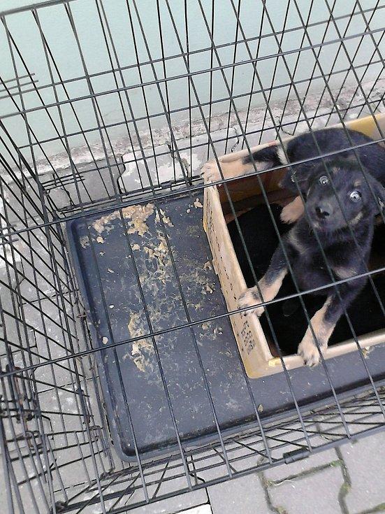 Nalezená štěňata v kleci.