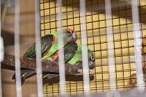 Výstava exotických ptáků v Klatovech.