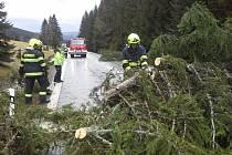 Úklid stromů na Železnorudsku.