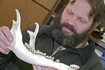 Soudní znalec Vladimír  Bádr si prohlíží čelist jelena.
